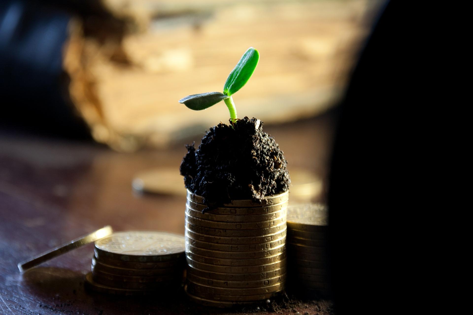 dropshipping money plant